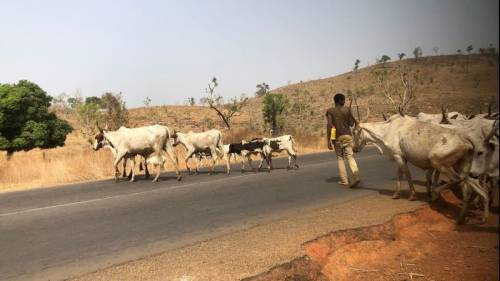 CONAECDA To Herdsmen: We Are Coming After You To Reclaim Our Lands, Communities